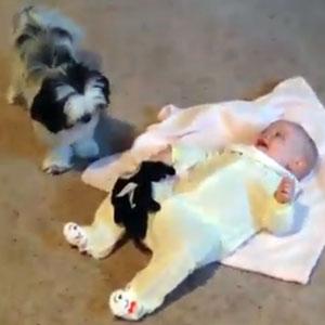 Cachorros e Bebês super fofos
