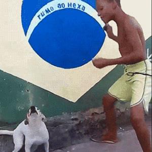 Dançando com o cachorrinho