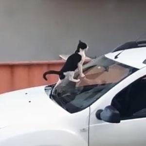 Doa-se um gato super comportado!