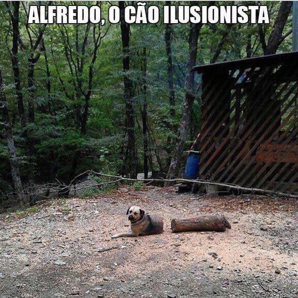 Alfredo, o cão ilusionista