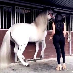 Você gosta de Cavalo ou Cavala?
