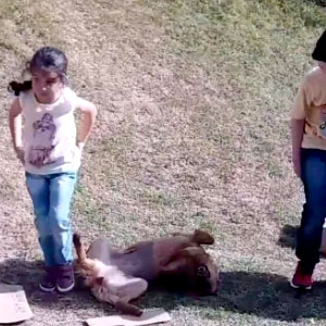 Cachorra brincando de escorregar