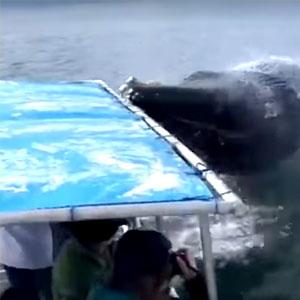 Surpresa durante passeio de barco