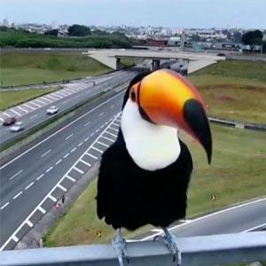 Tucano faz pose em câmera de rodovia