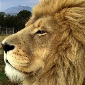 Seja o Leão